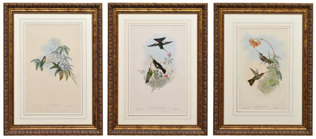 (3) GOULD HAND-COLORED LITHOGRAPHS HUMMINGBIRDS