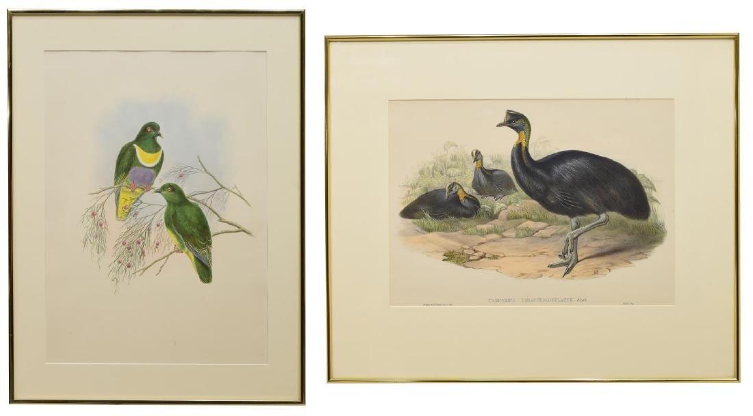 (2) J. GOULD BIRDS OF AUSTRALIA, GUINEA LITHOGRAPH