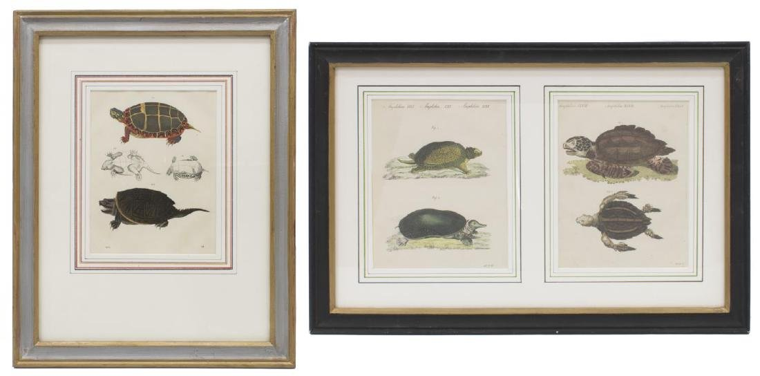 (2) FRAMED HAND-COLORED TURTLE LITHOGRAPHS