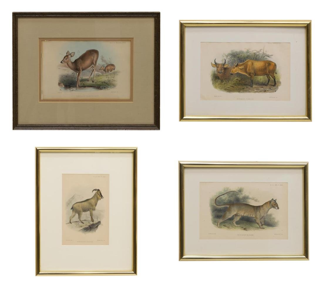 (4) 'ZOOLOGICAL SOCIETY OF LONDON' LITHOGRAPHS