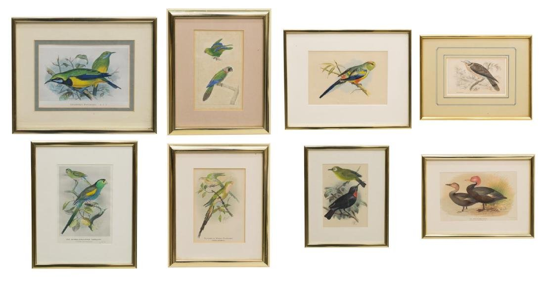 (8) FRAMED HAND-COLORED BIRD LITHOGRAPHS