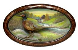 TAXIDERMY, FRAMED RING NECK PHEASANT DIORAMA