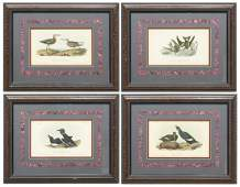 4 FRAMED AUDUBON BIRDS OF AMERICA LITHOGRAPHS