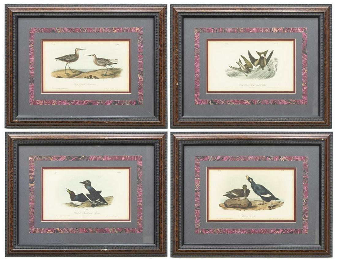(4) FRAMED AUDUBON BIRDS OF AMERICA LITHOGRAPHS