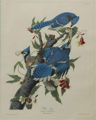 AFTER AUDUBON BLUE JAY HAND-COLORED LITHOGRAPH