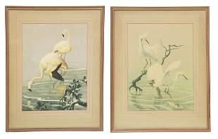 (2) ROGER TORY PETERSON (1908-1996) BIRD PRINTS