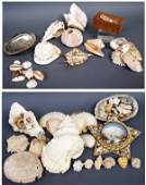 COLLECTION OF ASSORTED SEASHELLS ABABLONE CONCH