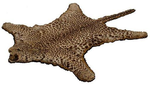 197 Spotted Leopard Skin Rug Full Head Mount