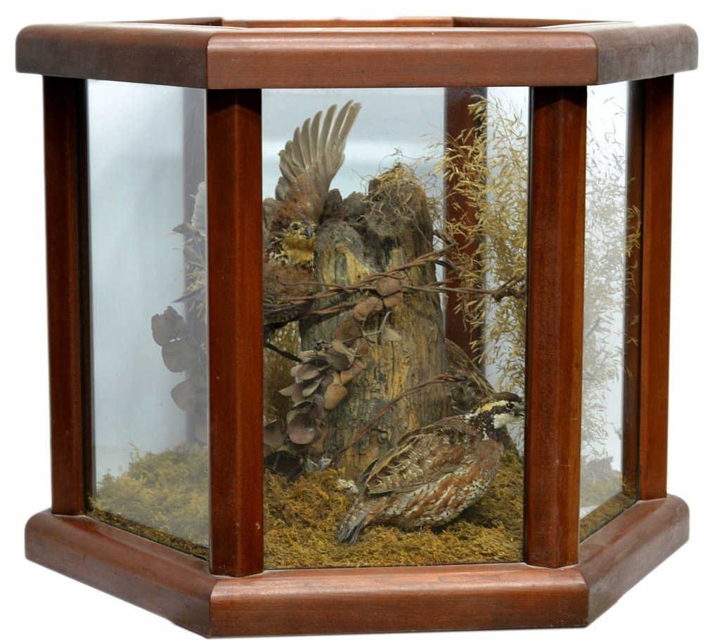 1: LARGE AVIAN TAXIDERMY DIORAMA, KING RANCH, TEXAS