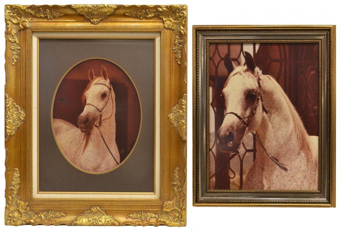 (2) PHOTOGRAPHIC PRINTS, ARABIAN HORSE PORTRAITS