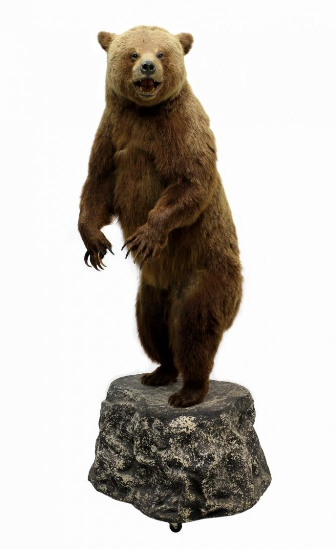 TAXIDERMY FULL MOUNT STANDING GRIZZLY BEAR - 3