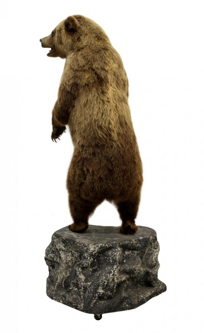 TAXIDERMY FULL MOUNT STANDING GRIZZLY BEAR - 5