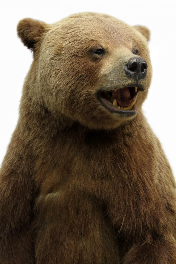 TAXIDERMY FULL MOUNT STANDING GRIZZLY BEAR - 6
