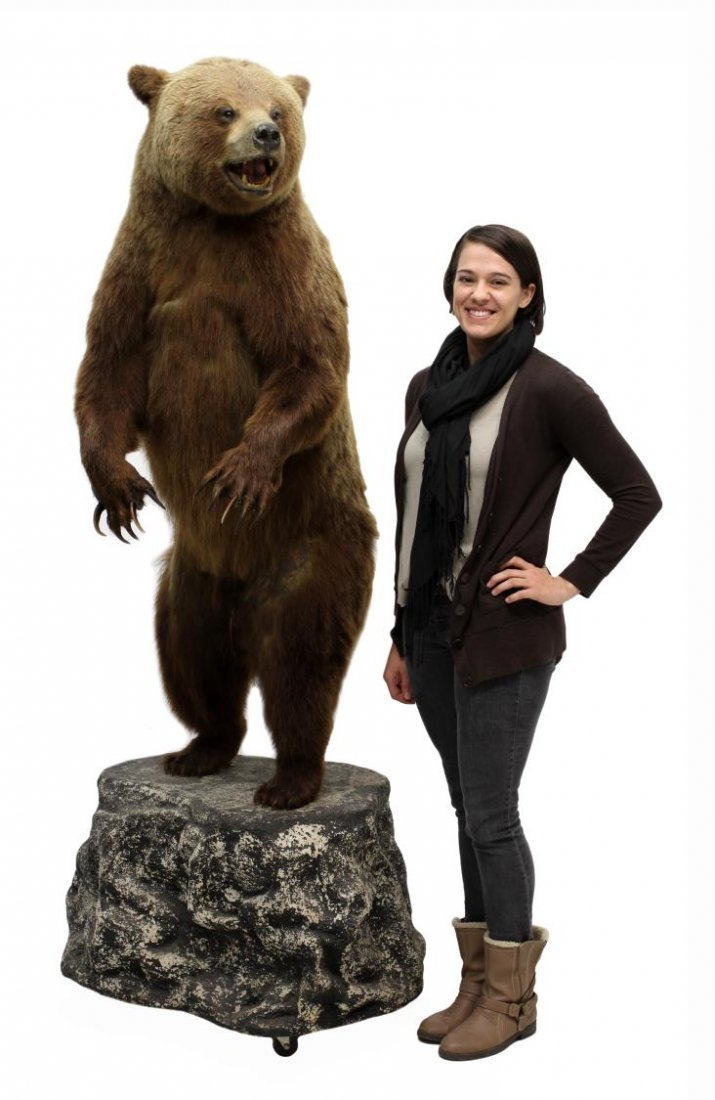 TAXIDERMY FULL MOUNT STANDING GRIZZLY BEAR - 7