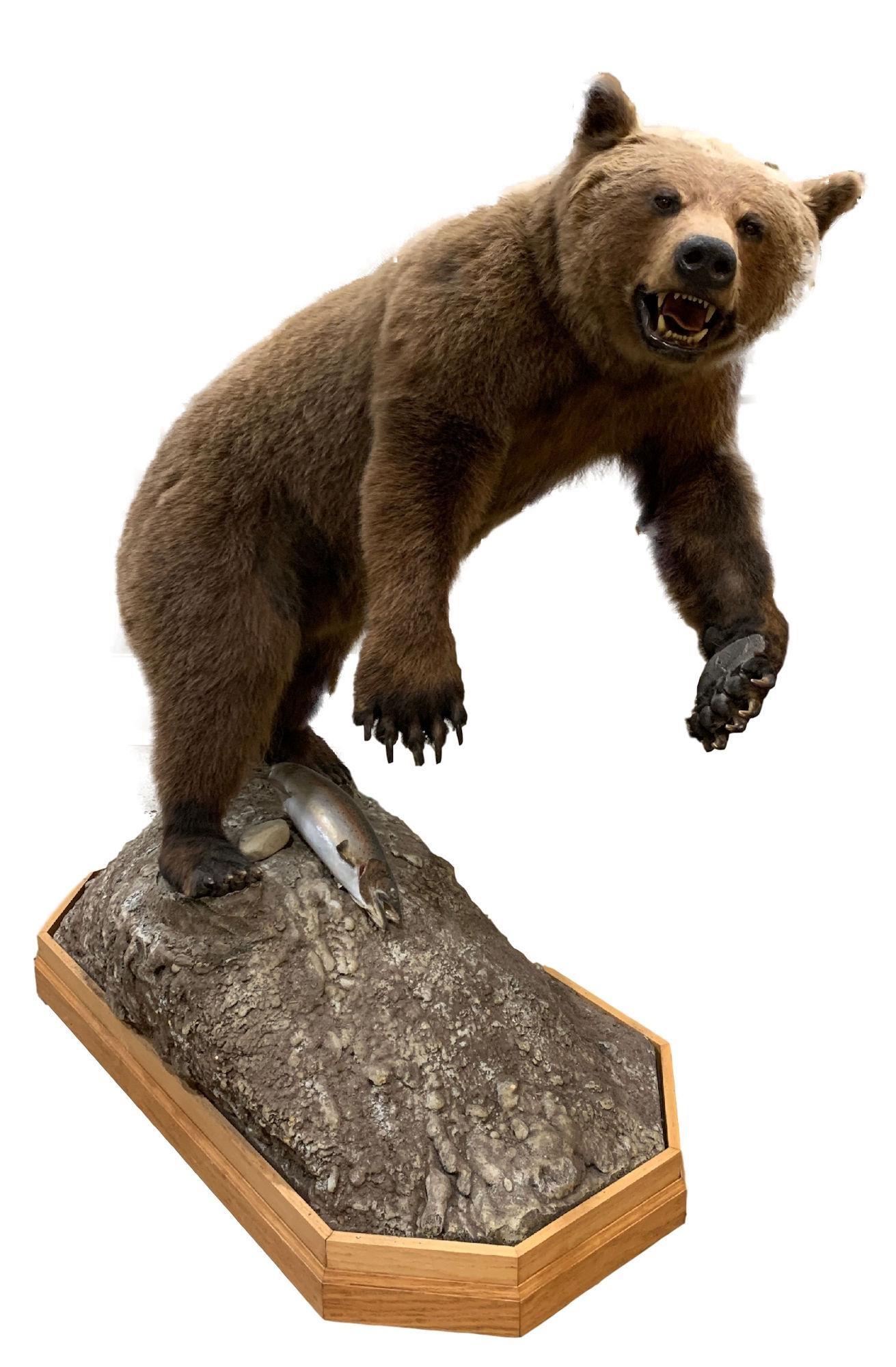 "TAXIDERMY MOUNT BROWN BEAR FULL BODY MOUNT 70"" H"