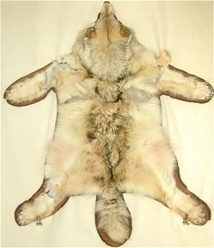 WHITE WOLF SKIN RUG 56 X 68