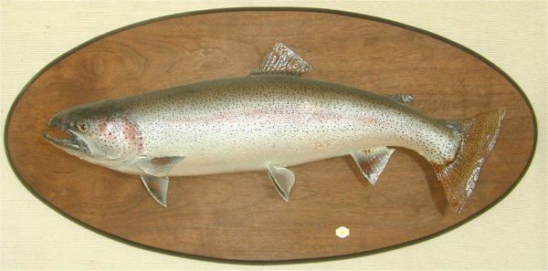 "28: STEEL HEAD TROUT MOUNT 29"" L"