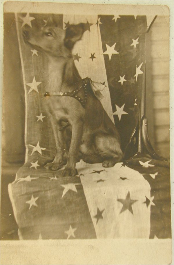 3625: CDV POSTCARD, DOG W/FLAG