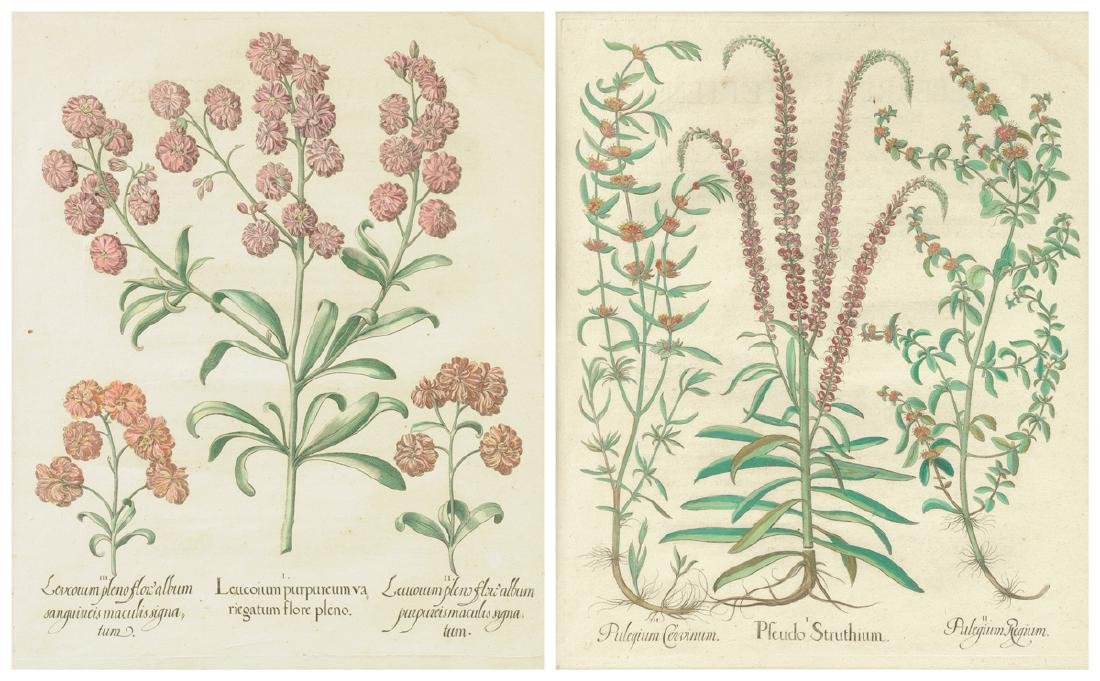 A PAIR OF FRAMED GERMAN HAND COLORED BOTANICAL