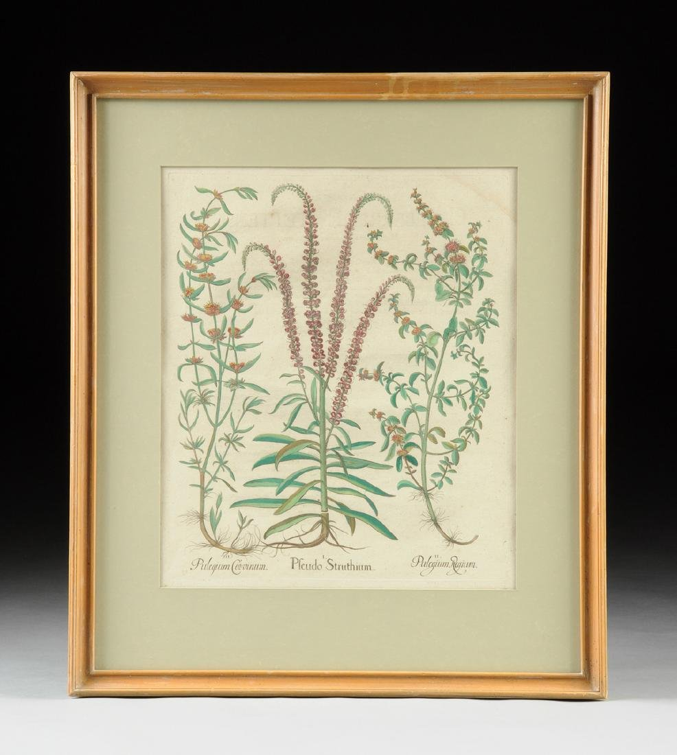 A PAIR OF FRAMED GERMAN HAND COLORED BOTANICAL - 2