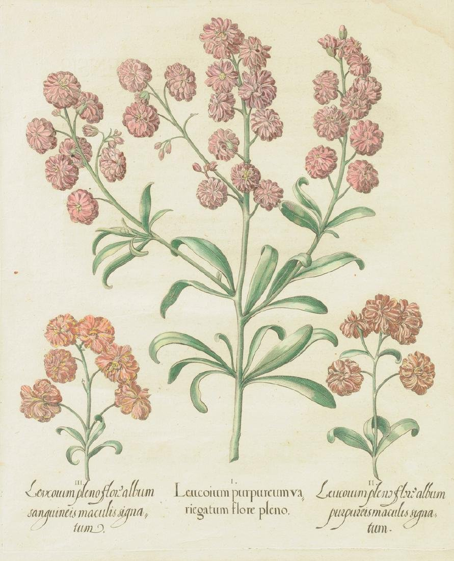 A PAIR OF FRAMED GERMAN HAND COLORED BOTANICAL - 5