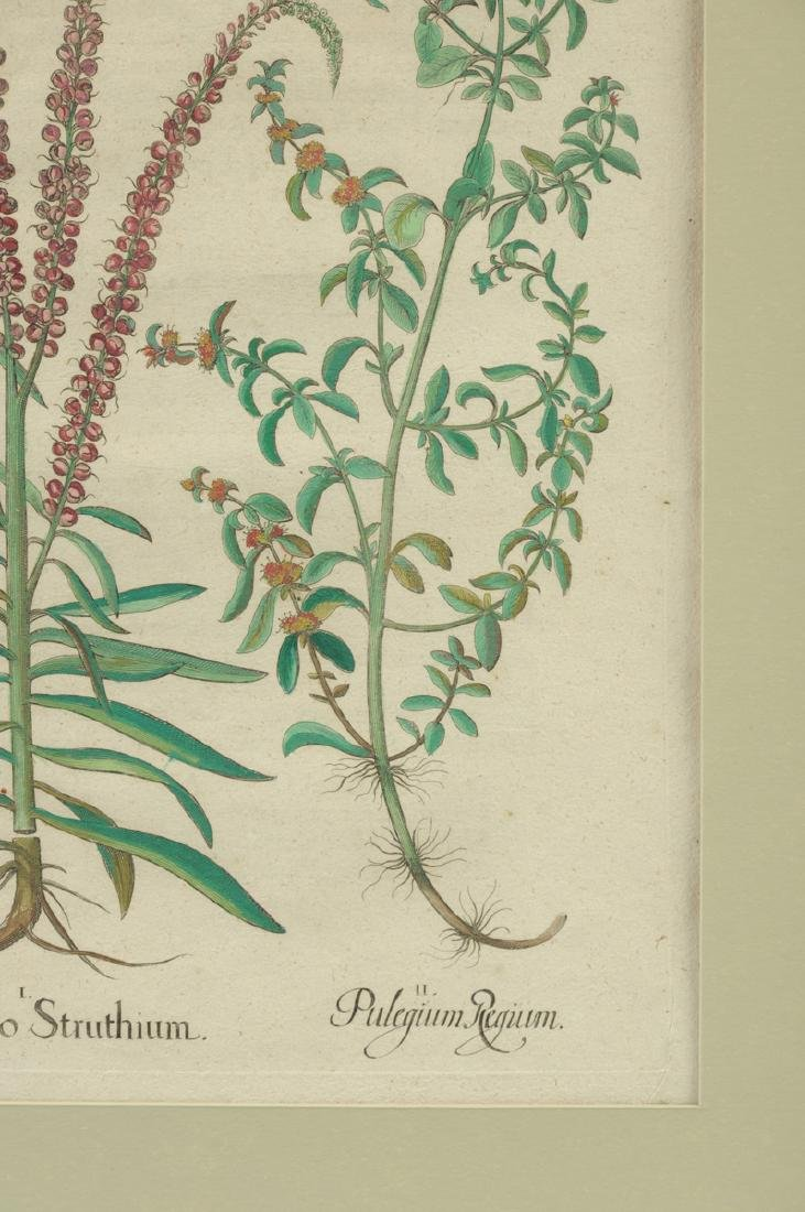 A PAIR OF FRAMED GERMAN HAND COLORED BOTANICAL - 9