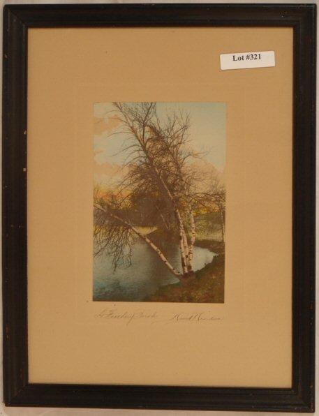 321: David Davidson - A Feathery Birch