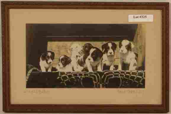 Fred Thompson - Where's Mother - RARE DOGS