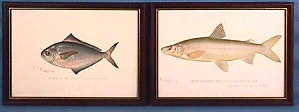 219: Pair of Denton Fish Prints