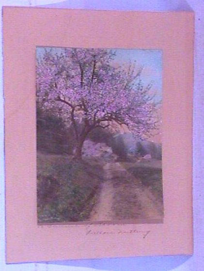 11: Wallace Nutting - A Tunnel of Bloom - Unframed