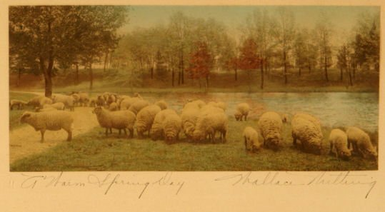 569: Wallace Nutting - A Warm Spring Day - Sheep - 2