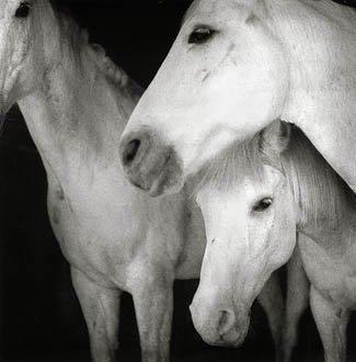 'Caballos Blancos' by Keith Carter Photogravure 49/235