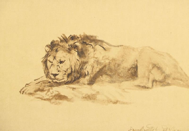Study of a Couchant Lion by Rembrandt - Lithographic