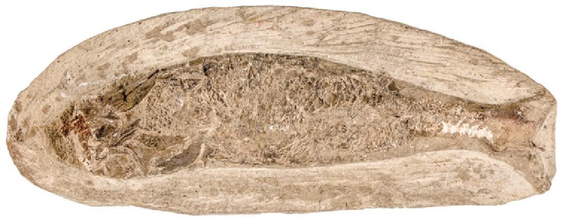 Prehistoric 4 in. Fish Fossil in Stone Matrix