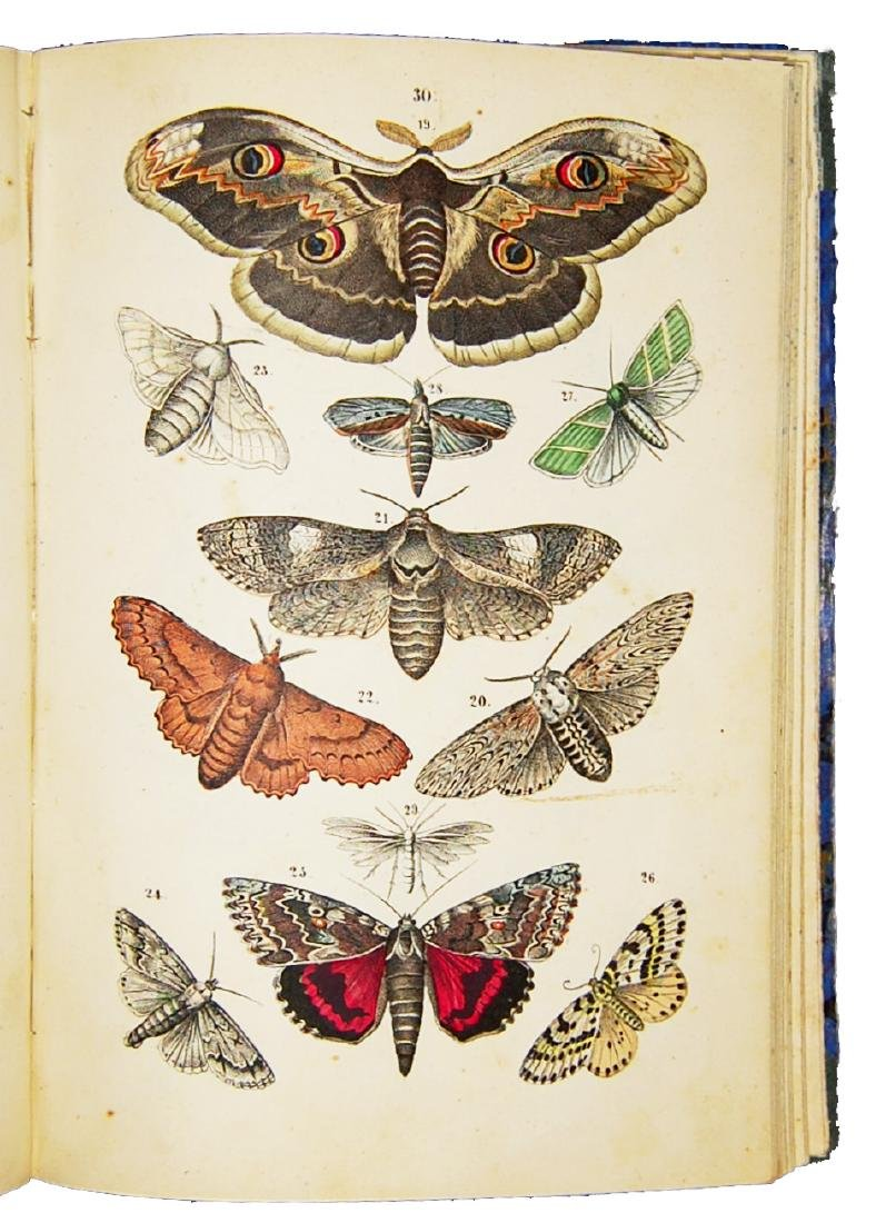 [Natural history] Naturgeschichtlicher Schulatlas 1855