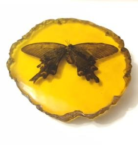Amber Encased Fossilized Amazon Butterfly