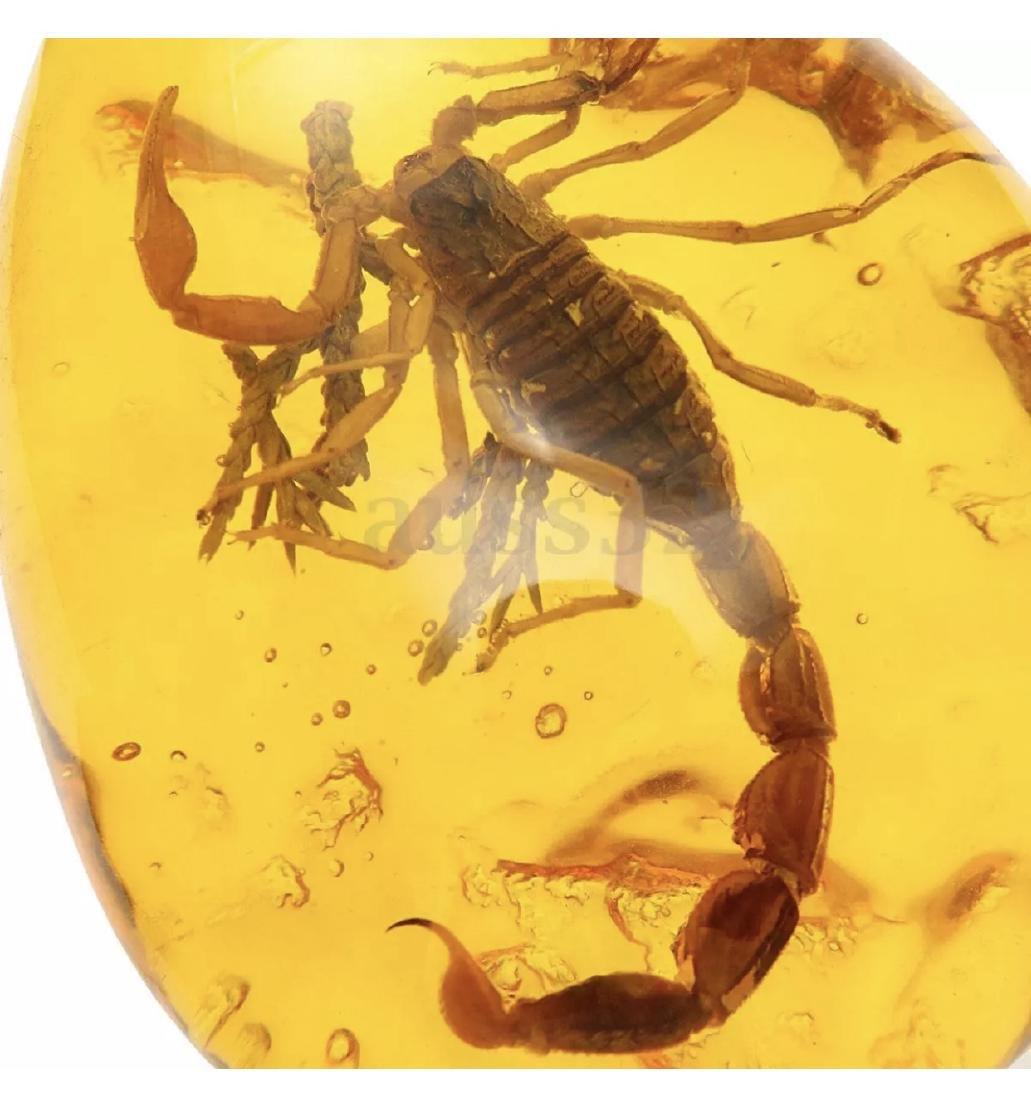 Amber Encased Desert Scorpion Teardrop Amulet - 3