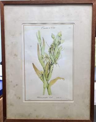 antique color framed print