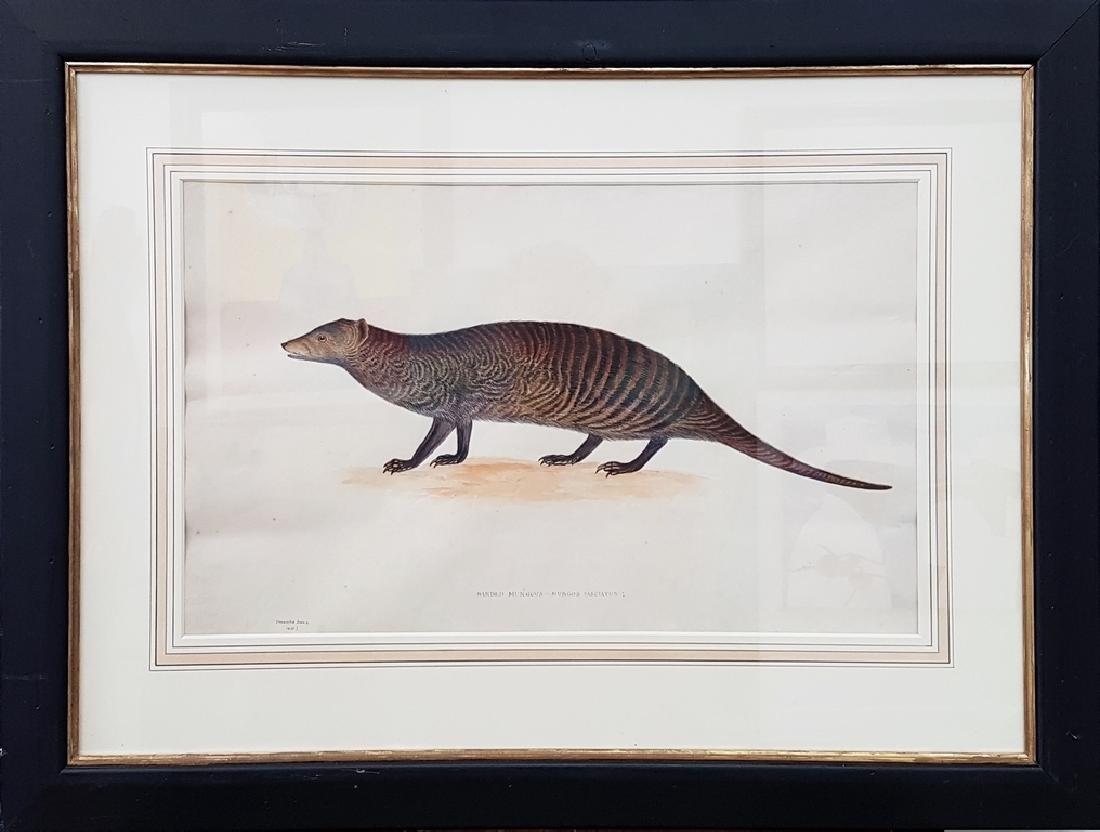 Antique Color Pencil Animal Drawing