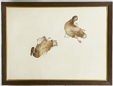 Steven Porwol. Hen Mallards. Watercolour on paper.