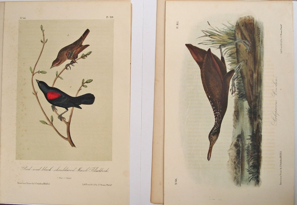 1078: 2 Audubon Octavo Bird Original Prints