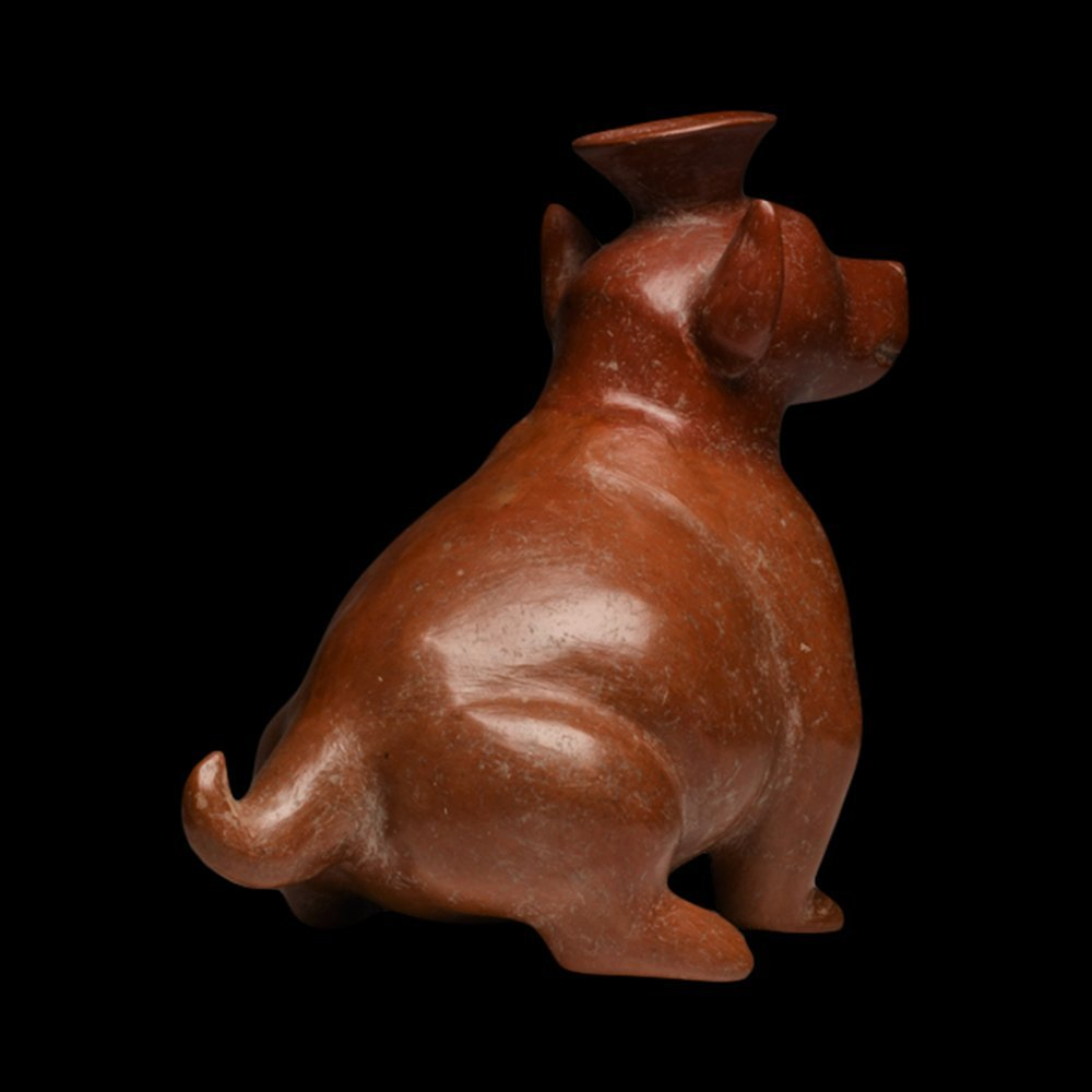 Pre-Columbian Colima Redware Seated Dog - 3