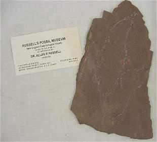 """Paleontology, Dinosaur footprint, 4""""w x 7""""l, identi"""