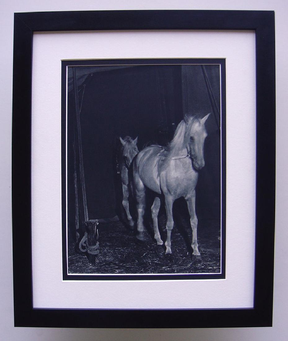 1930's Brassai Horses Framed Photogravure