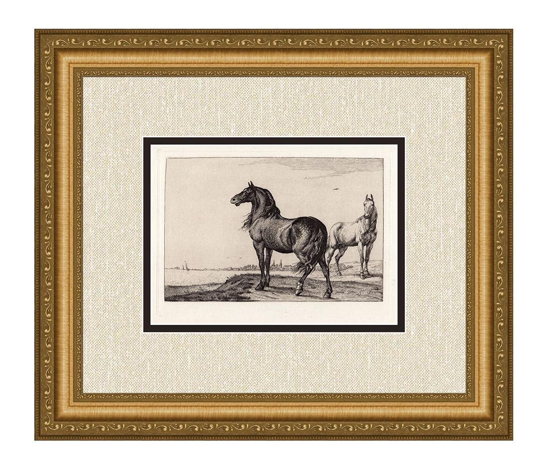 Paulus Potter Neighing Horse Etching Durand