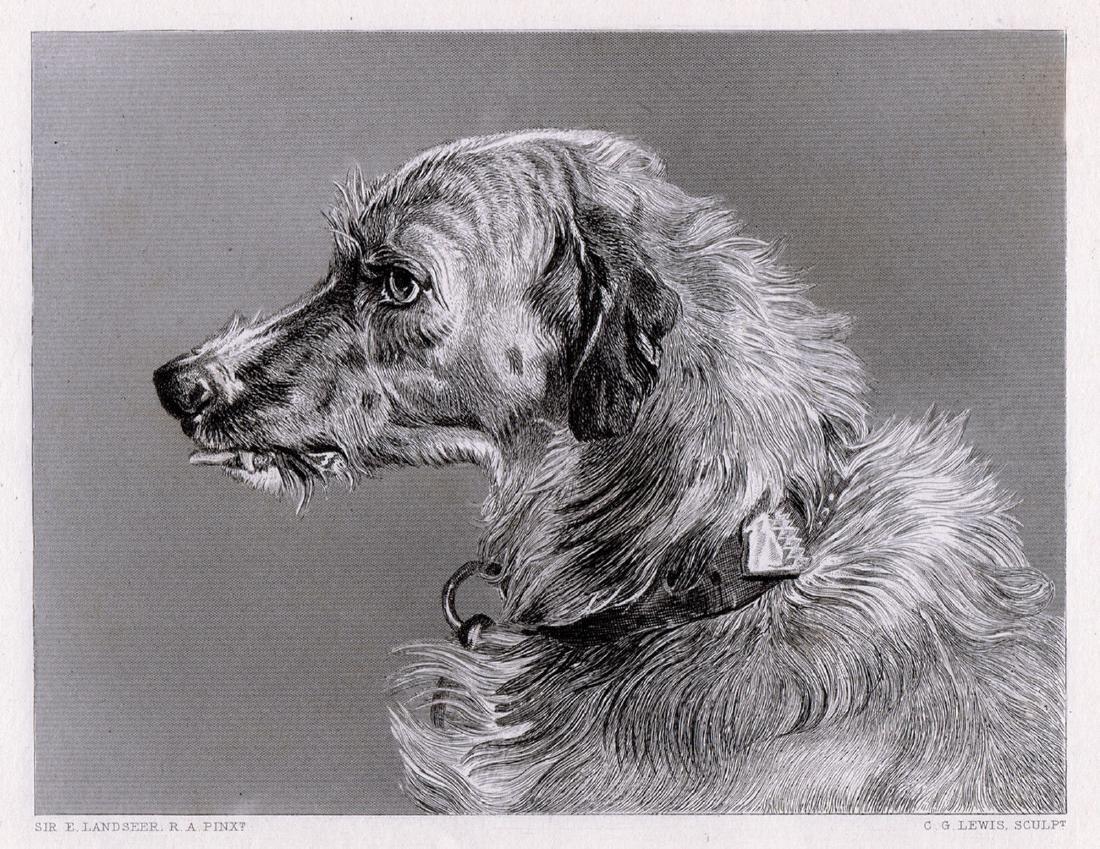Edwin Landseer Head of Deerhound 1878 engraving