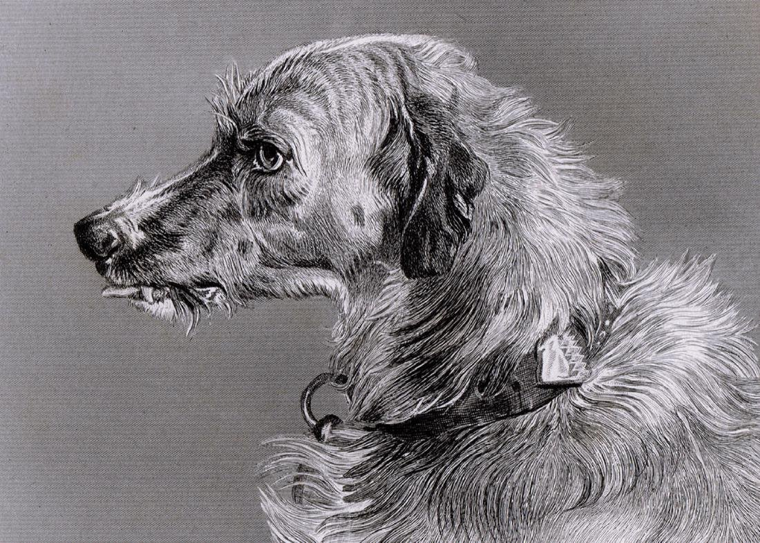 Edwin Landseer Head of Deerhound 1878 engraving - 2