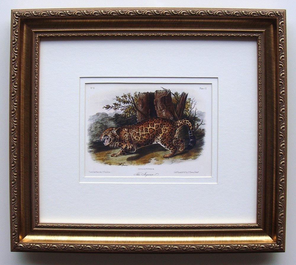 Audubon Quadruped Plate 101 Jaquar Framed
