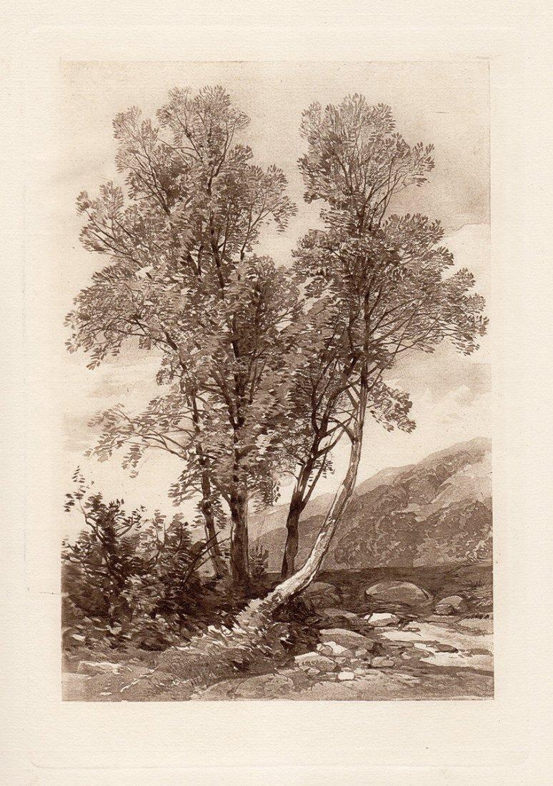 James Harding Engraving Ash Trees 1800s