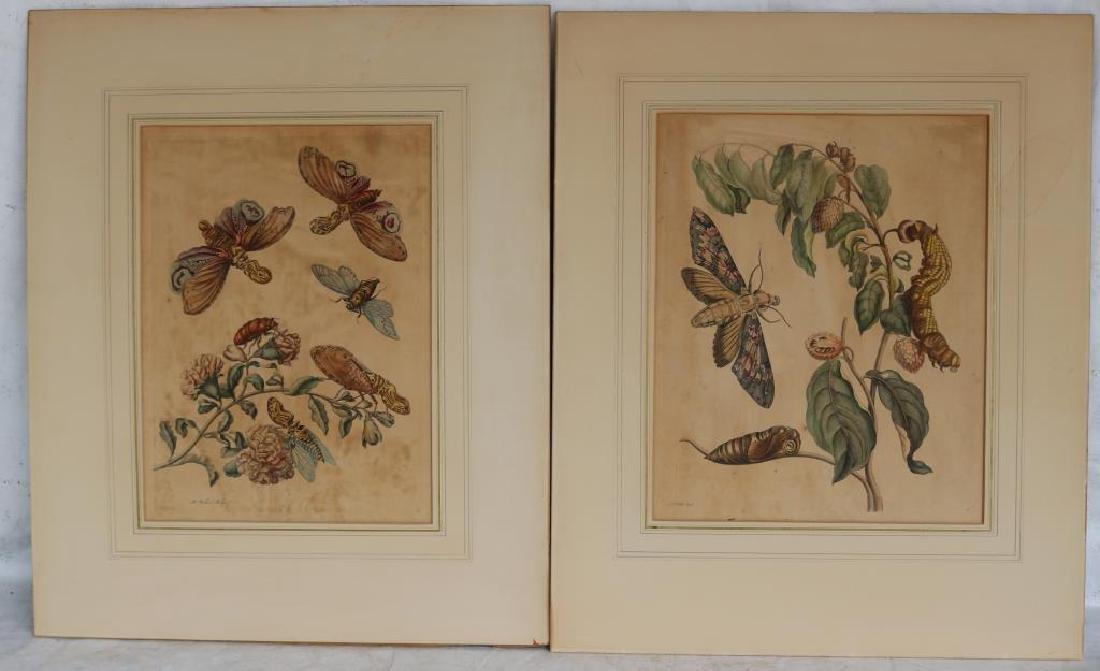 2 MATTED HAND COLORED ENGRAVINGS ATTRIBUTED TO